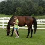 Help Your Teens EquineTherapy-150x150 Therapeutic Boarding Schools in Raleigh North Carolina